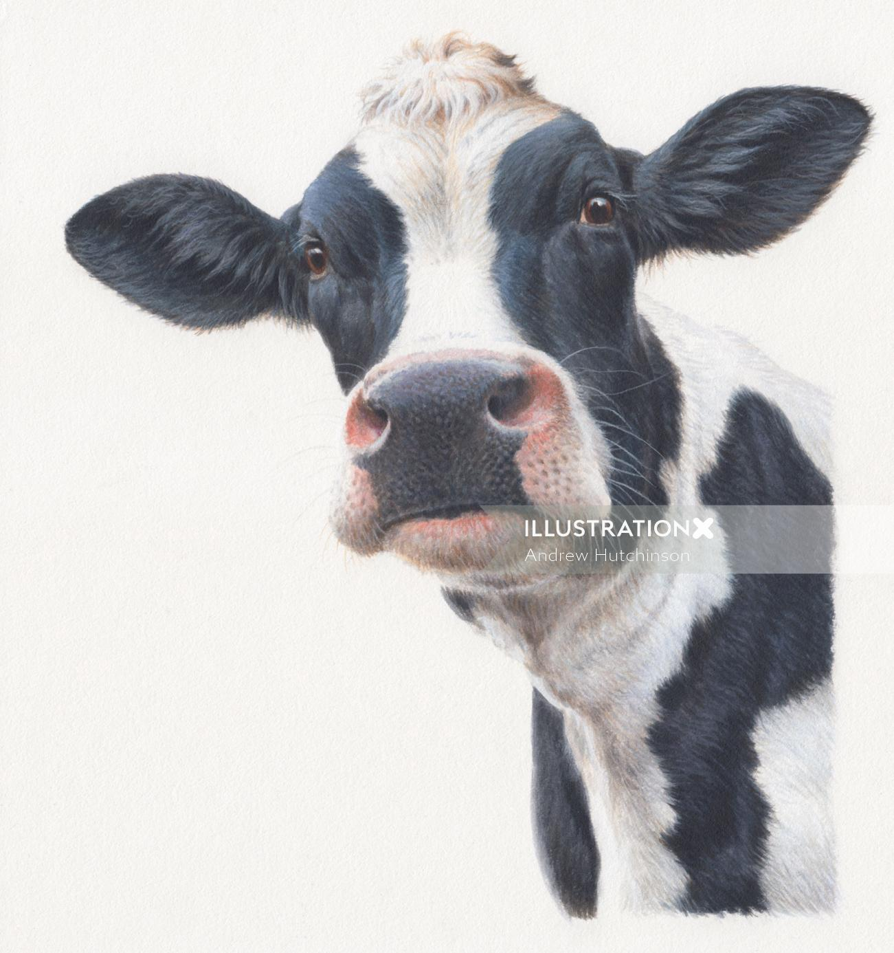 dairy cow