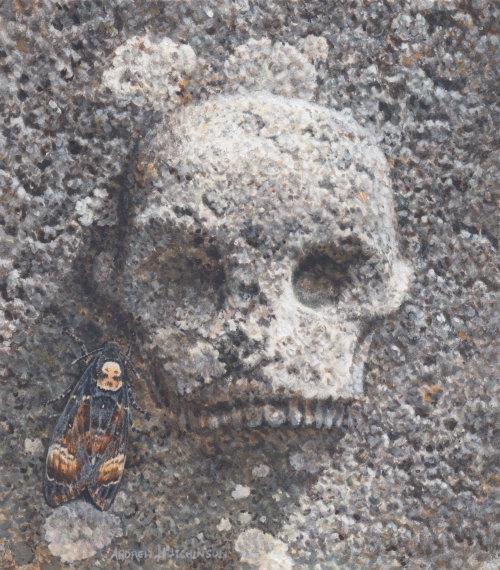 death's head hawk moth