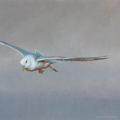 Isolated bird flying painting by Andrew Hutchinson