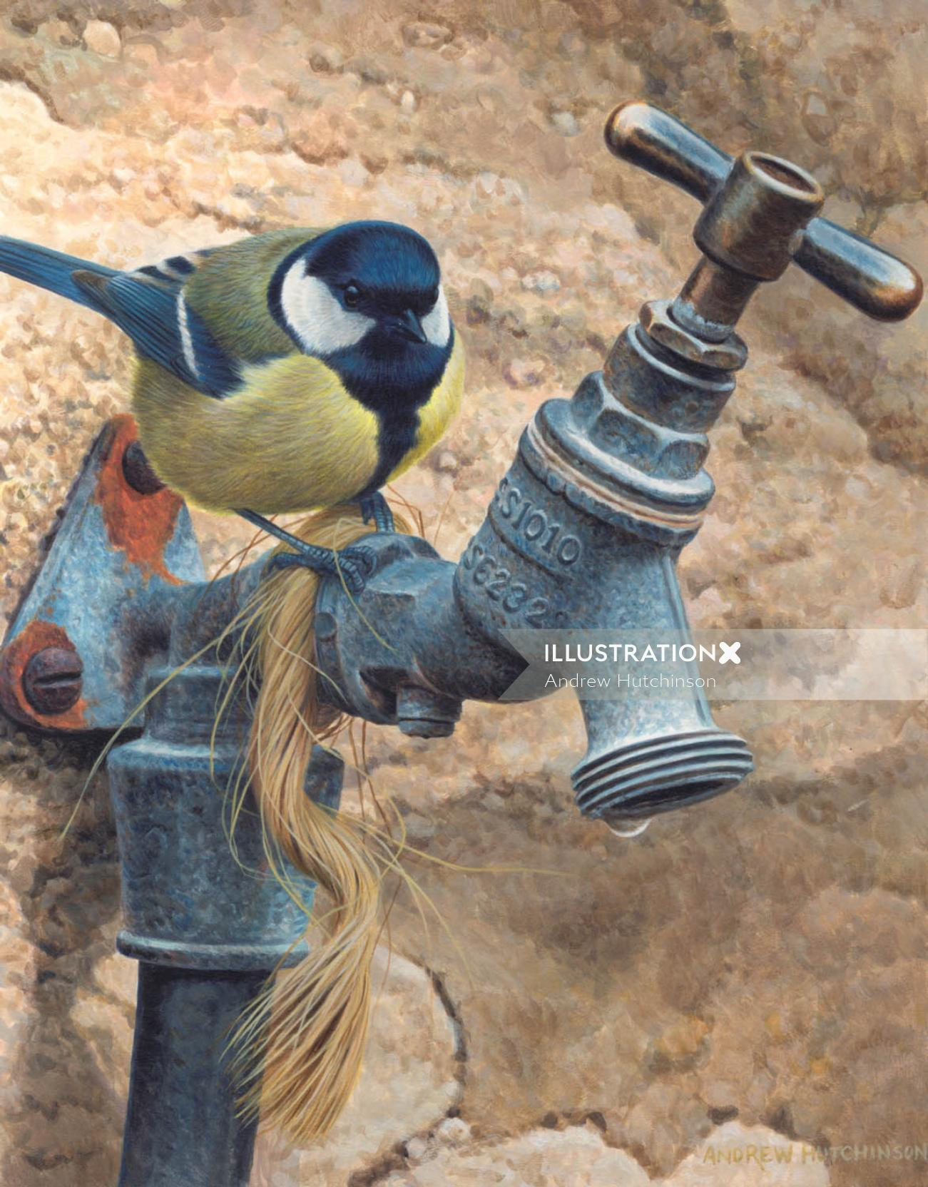 Illustration of great tit bird drinking water © Andrew Hutchinson