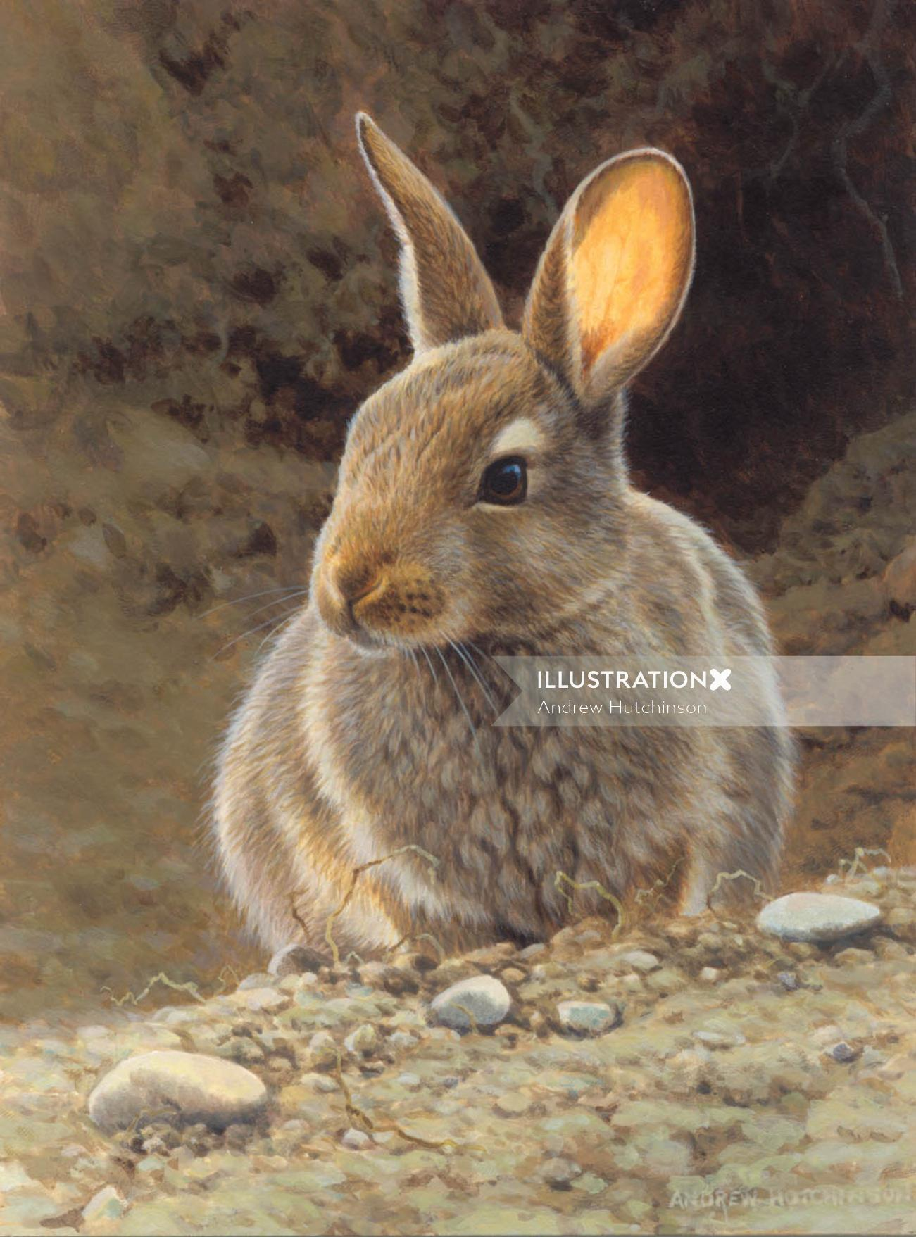 Rabbit Illustration, Wildlife Images © Andrew Hutchinson
