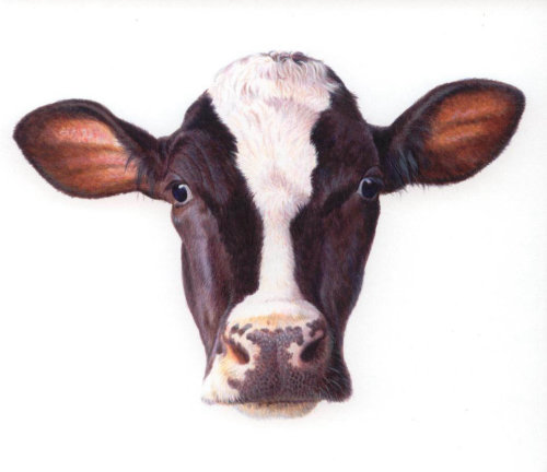 Portrait of cow