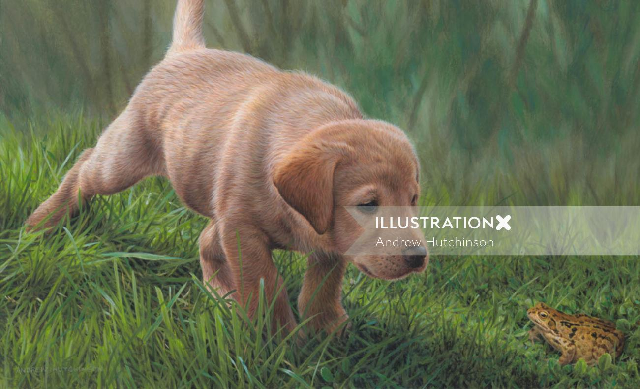 Golden labrador Illustration, Dogs and Animals Images © Andrew Hutchinson