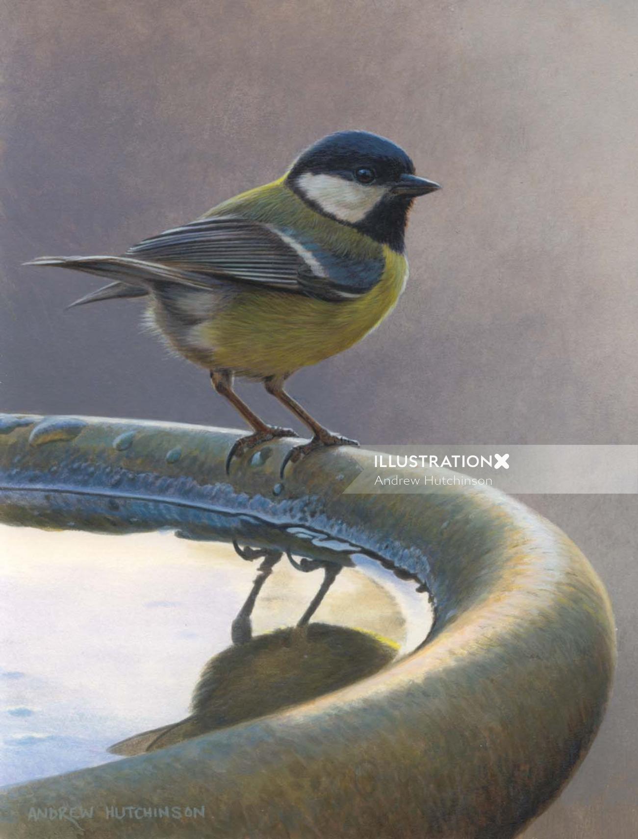 Bird illustration by Andrew Hutchinson