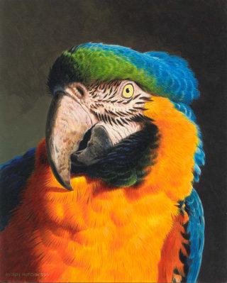 Macaw | Bird illustration