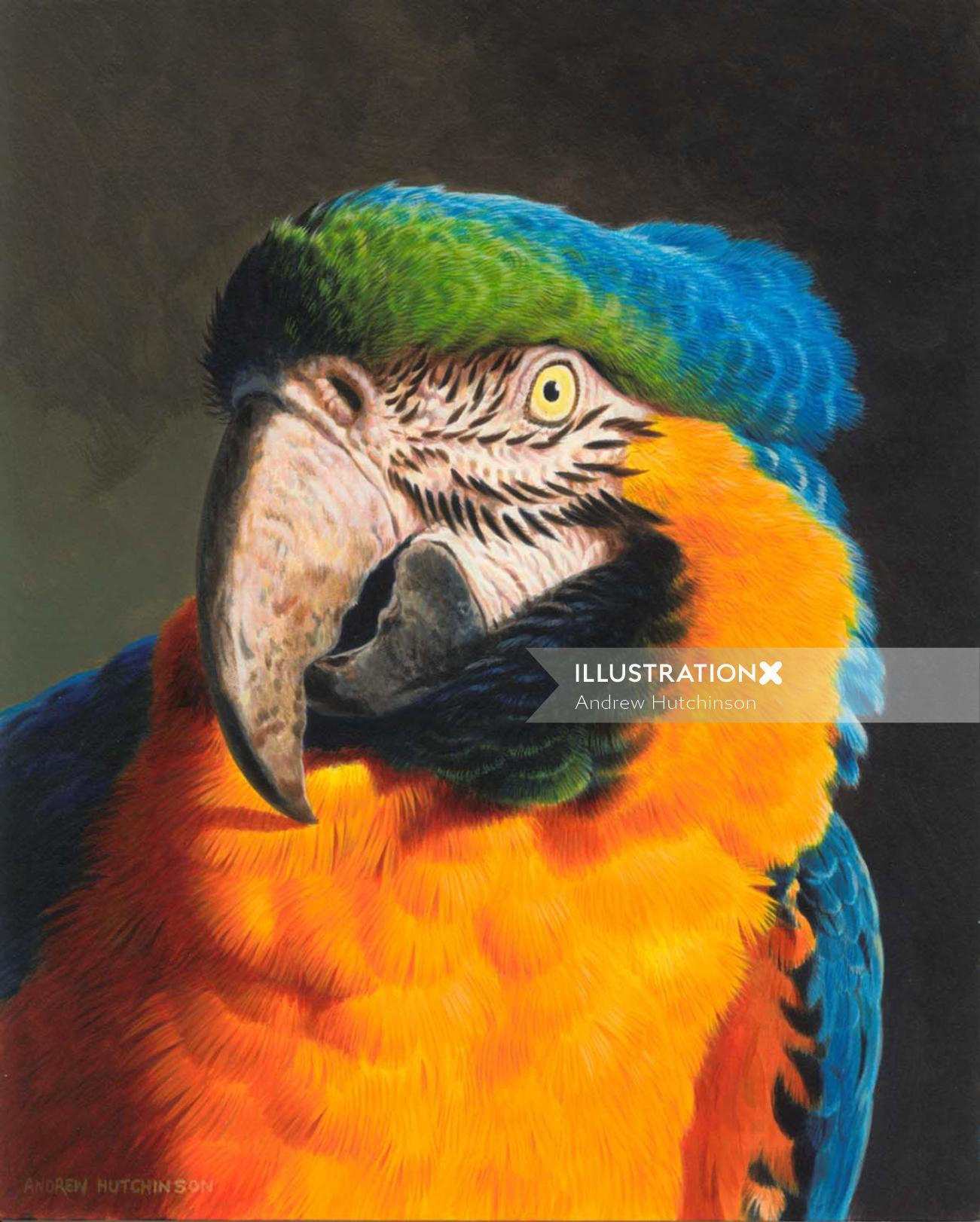 Macaw | Bird illustration