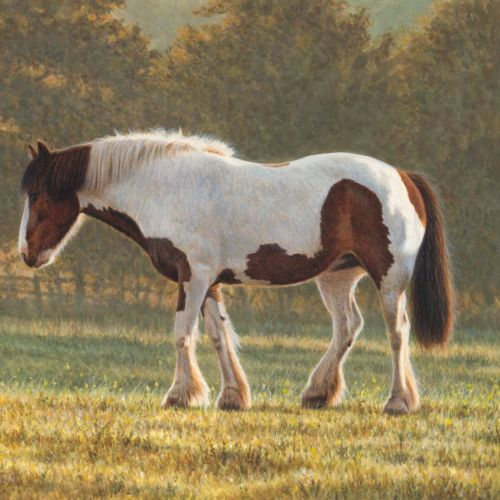 Countryside Horse Illustration, Animals Images © Andrew Hutchinson