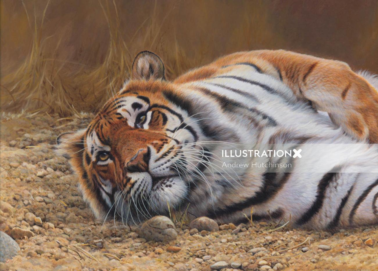 Tiger Resting Illustration, Wildlife Images © Andrew Hutchinson