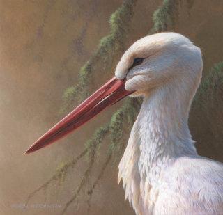 White Stork | Bird illustration