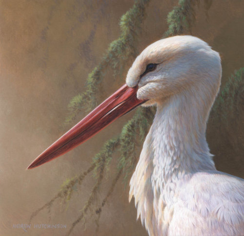 White Stork | Bird illustration