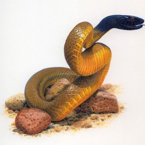 Snake Reptile Illustration, Wildlife Images © Andrew Hutchinson