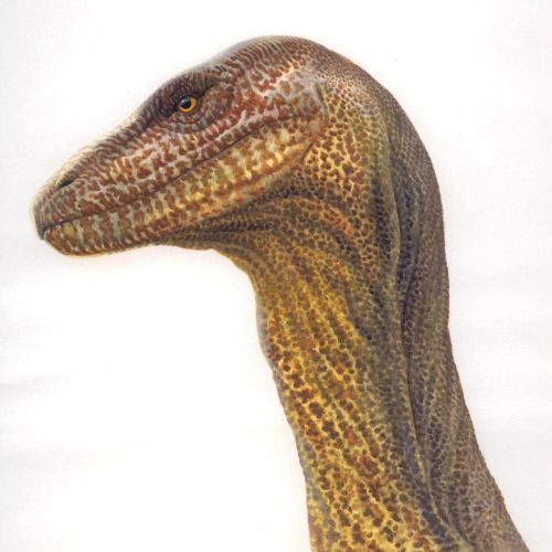 Dinosaur Illustration, Wildlife Images © Andrew Hutchinson