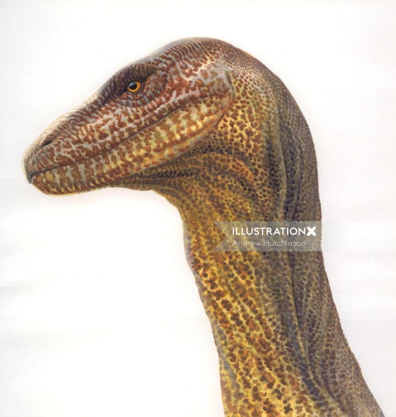 Dinosaur Illustration, Wildlife Images © Andrew Hutchinson