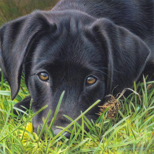 Black Labrador | Dog illustration