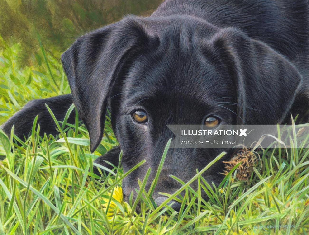 Black labrador illustration, Animals and Pets Images © Andrew Hutchinson