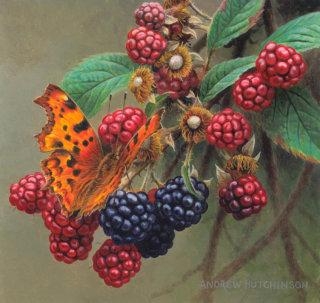 Blackberries Fruit Illustration, Food Images © Andrew Hutchinson