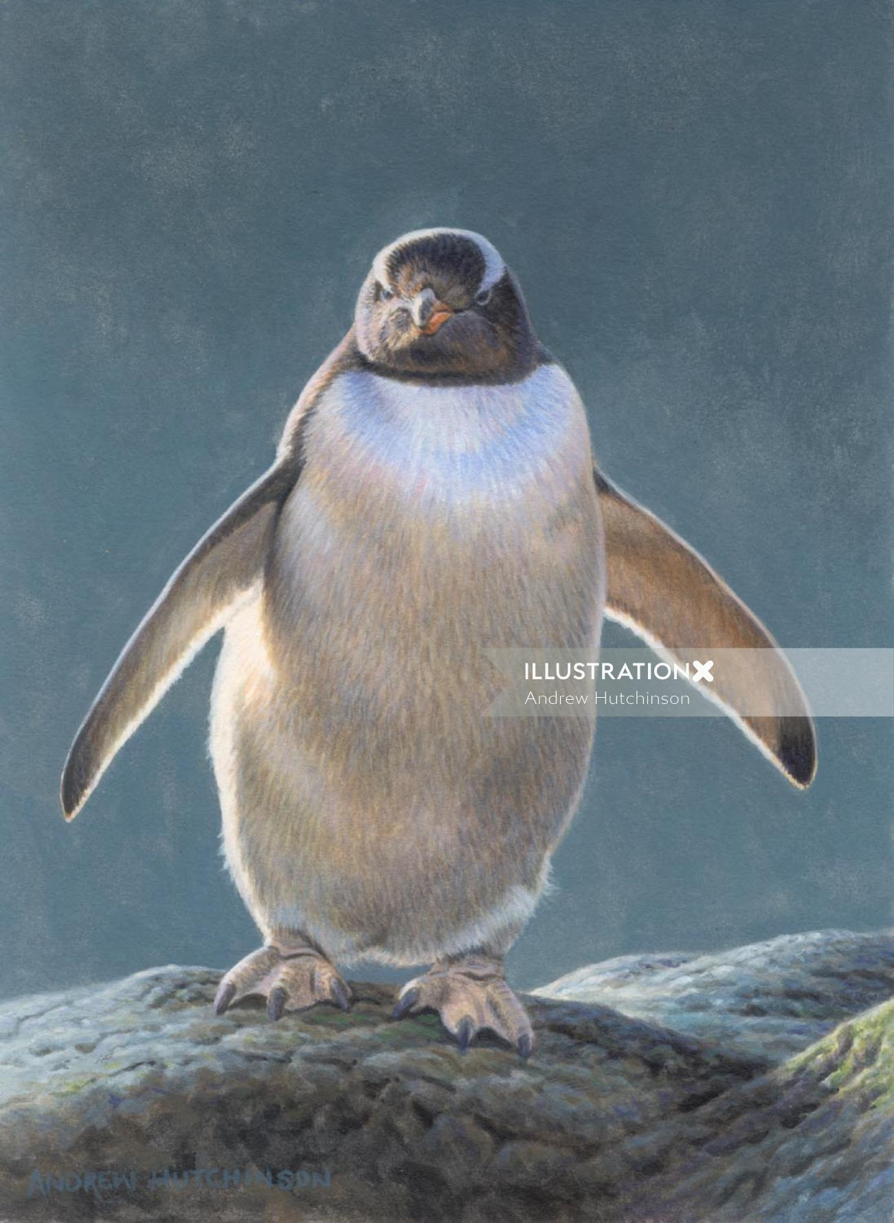 Illustration of gentoo penguin © Andrew Hutchinson