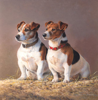 Illustration of jack russell dogs © Andrew Hutchinson