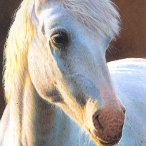 Horse Illustration, Farm Animals Images © Andrew Hutchinson