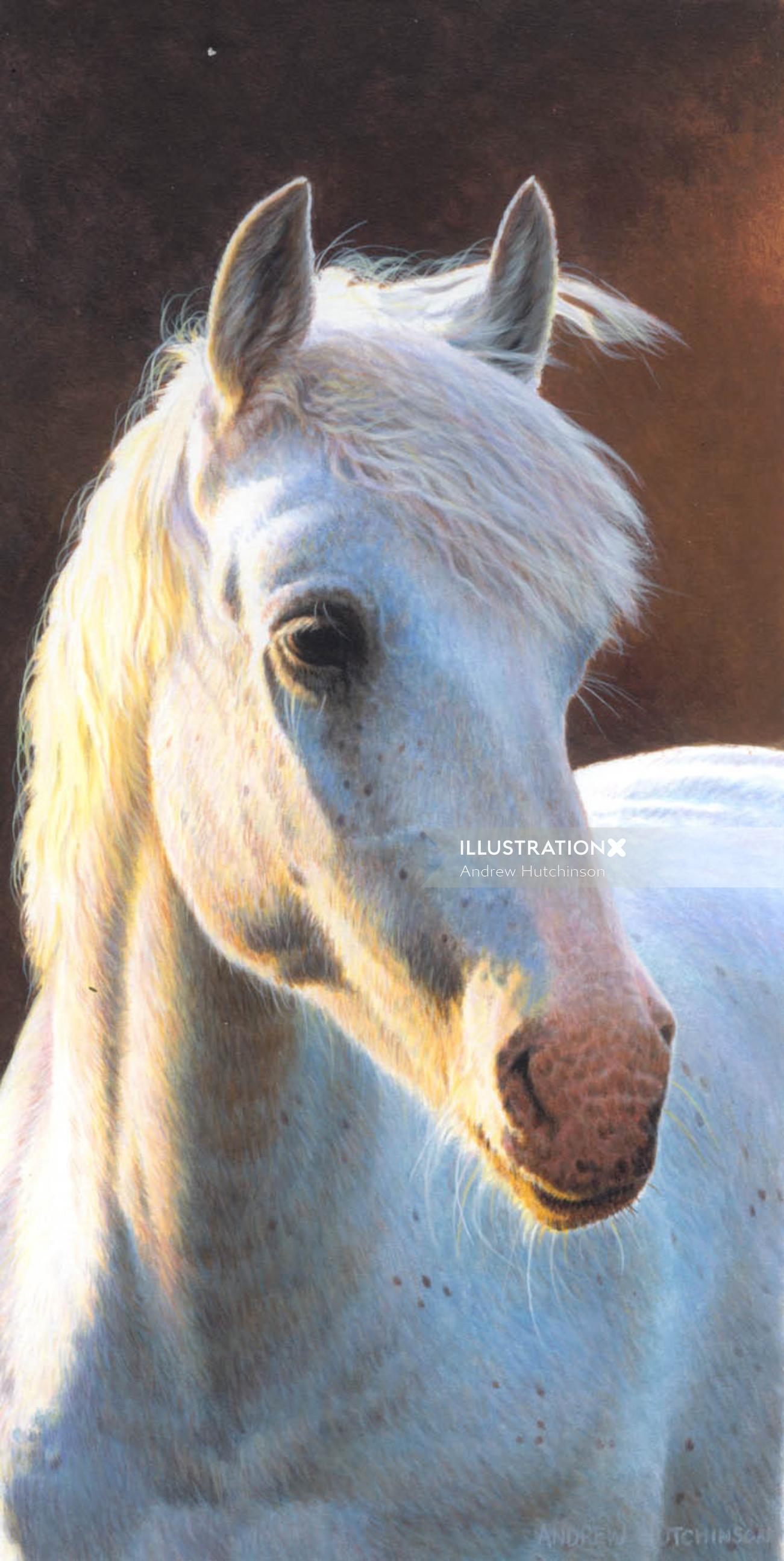 Horse Illustration, Farm Animals Images © Andrew Hutchinson