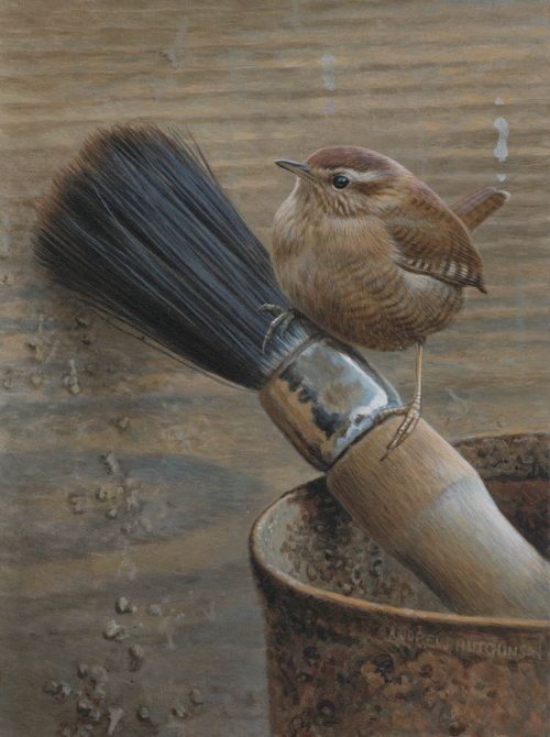 Illustration of wren bird © Andrew Hutchinson