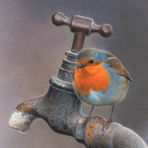 Illustration of Robin bird drinking water © Andrew Hutchinson