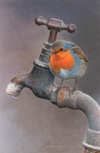 Illustration of Robin bird drinking water © Andrew Hutchinson