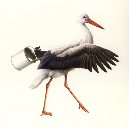 White Stork Illustration © Andrew Hutchinson