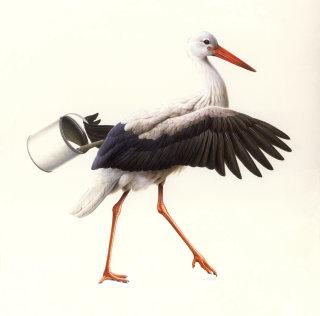White Stork Illustration © Andrew Hutchinson