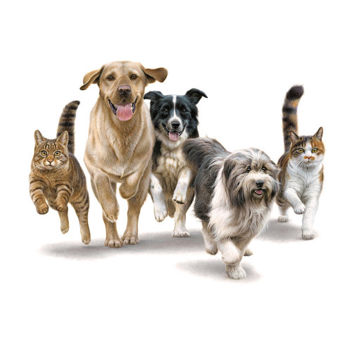Cats and Dogs Running Illustration, Animals and Pets Images © Andrew Hutchinson