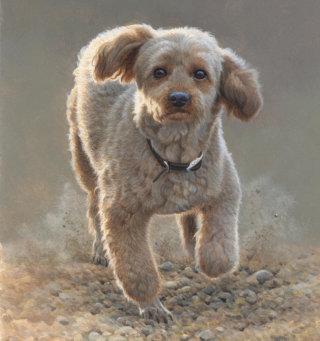 Poodle - dog illustration