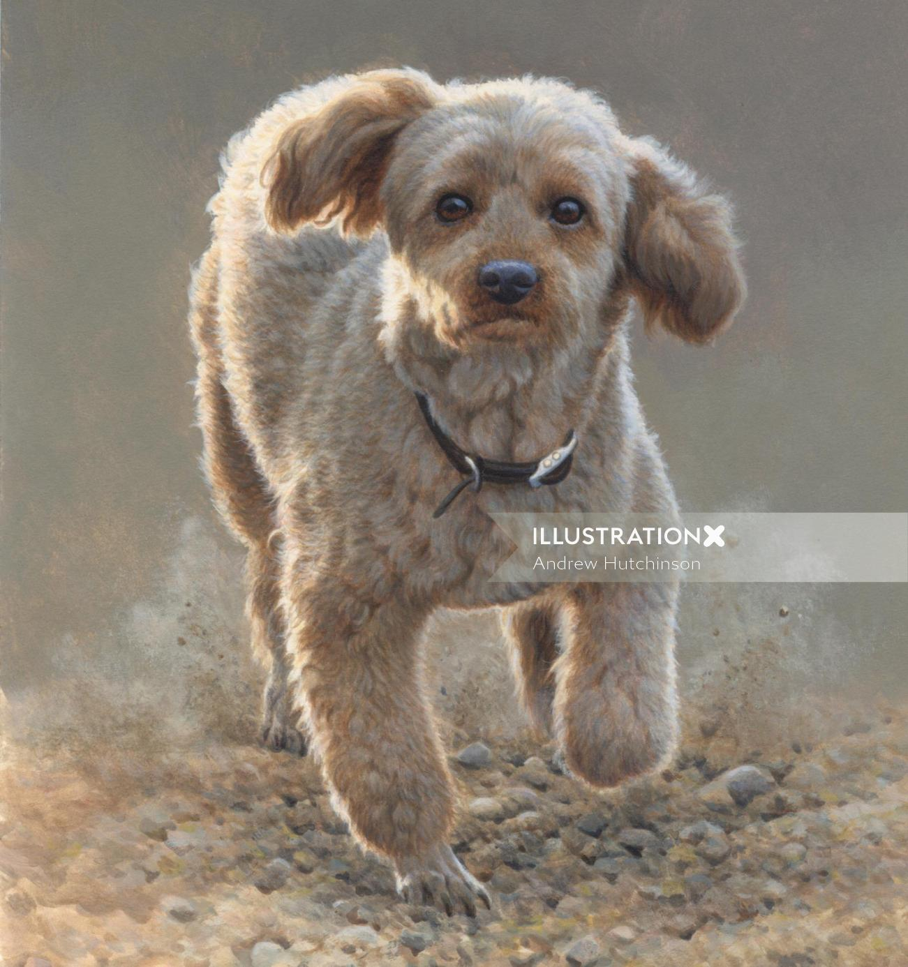 Poodle - dog illustration