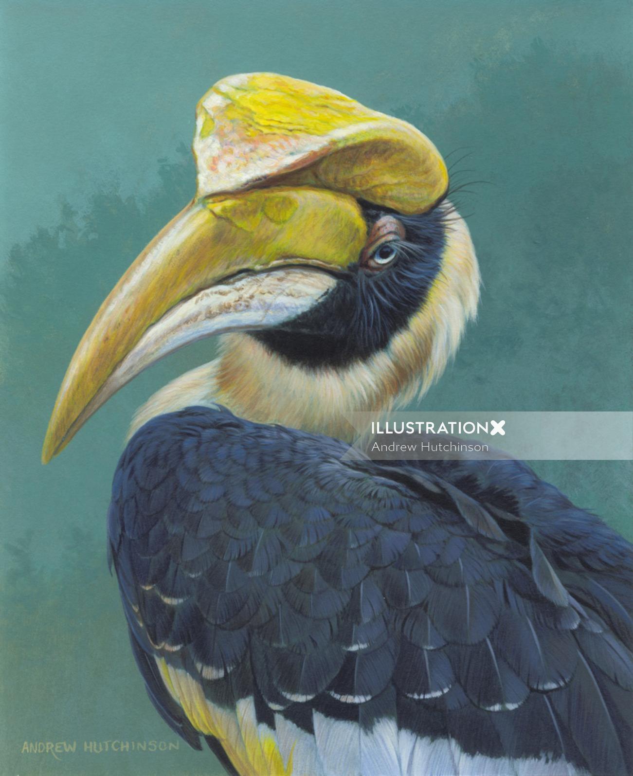 Hornbill illustration by Andrew Hutchinson