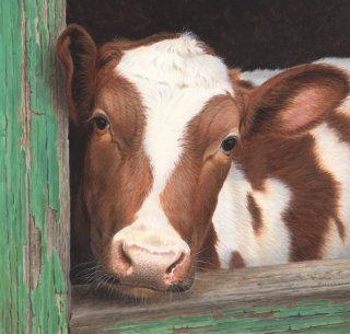 Illustration of farm cow