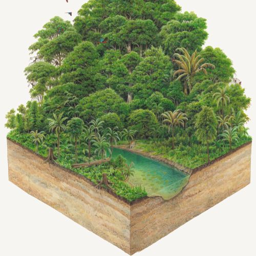 Rain forest illustration by Andrew Hutchinson