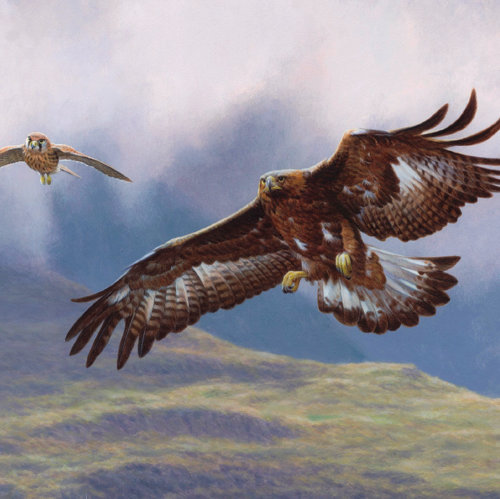 Golden eagle - Bird illustration