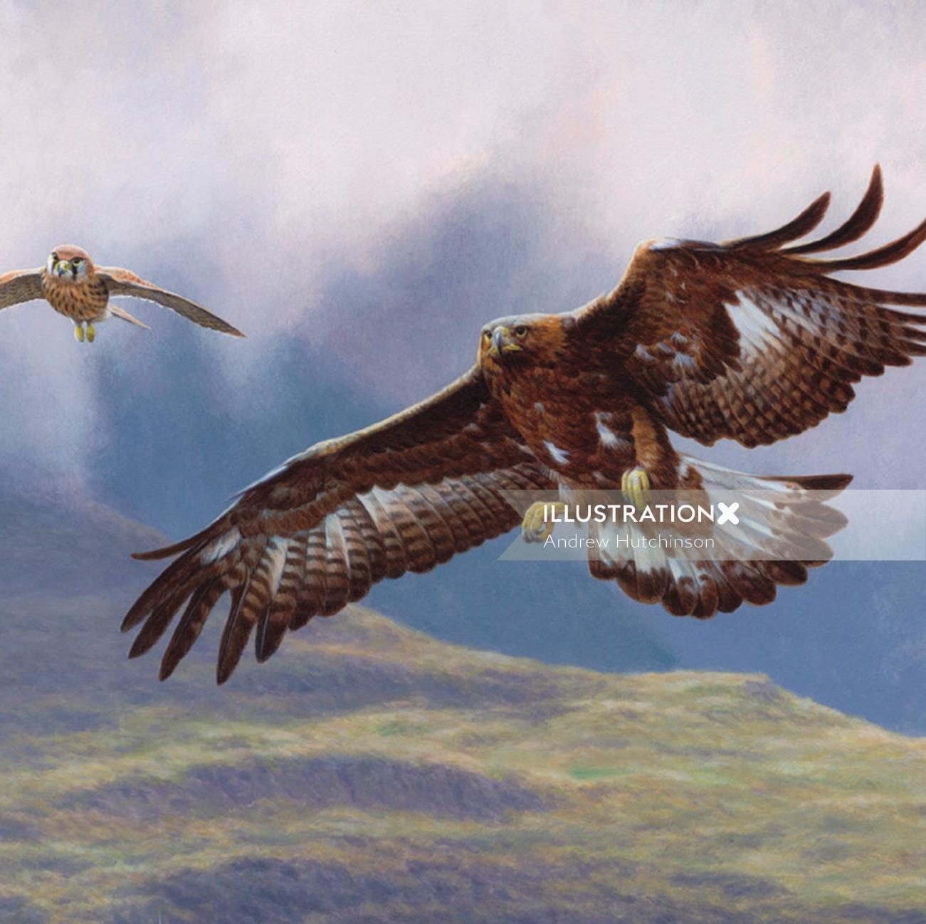 Golden eagle - Bird illustration
