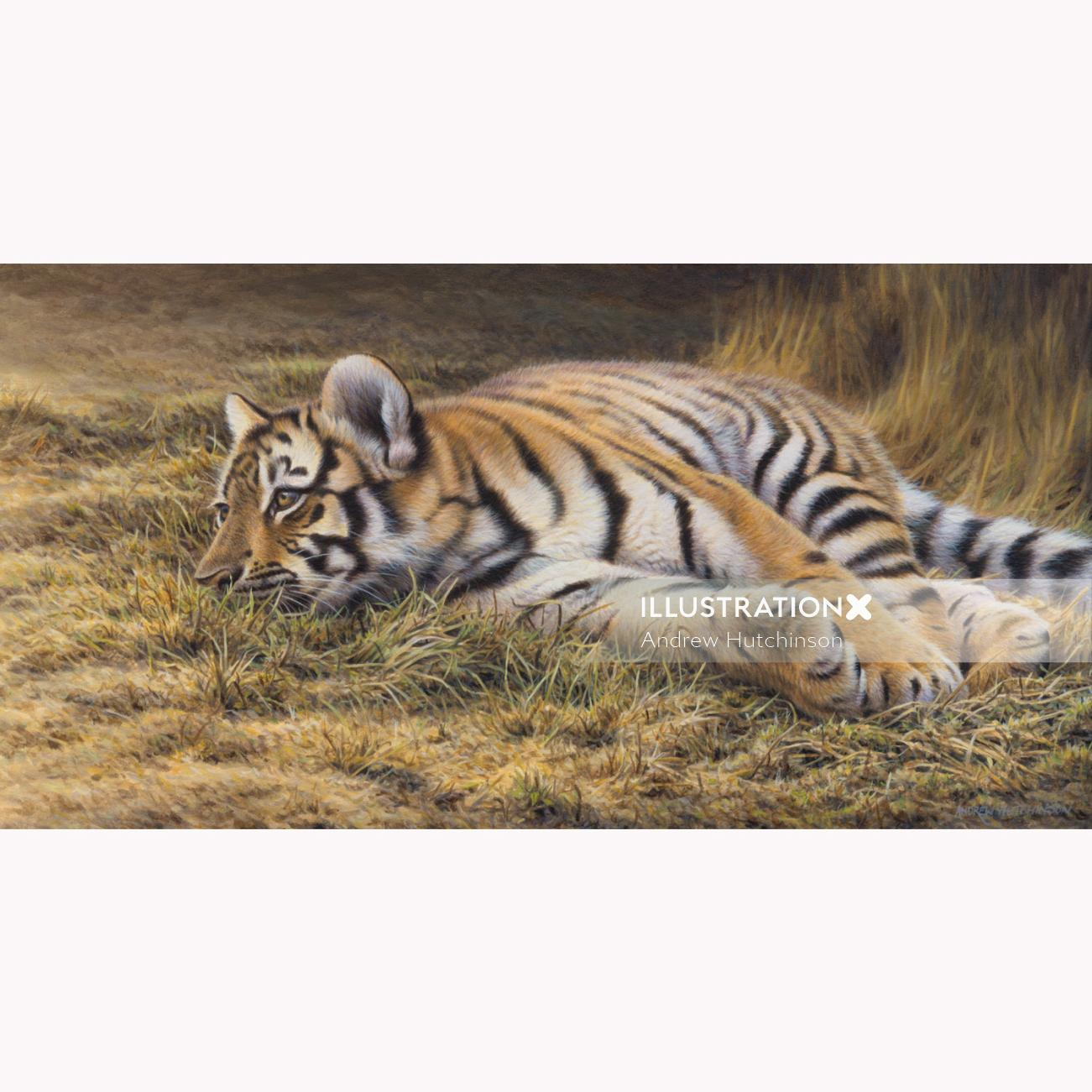 Tiger Sleeping Illustration, Wildlife Images © Andrew Hutchinson