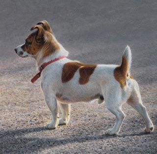 Jack Russell Terrier | Dog illustration