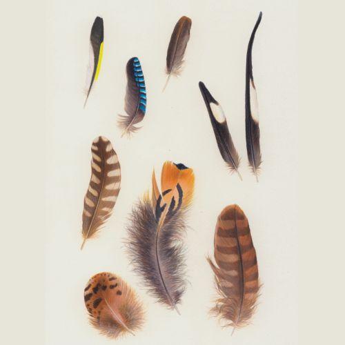 Illustration of Bird feathers
