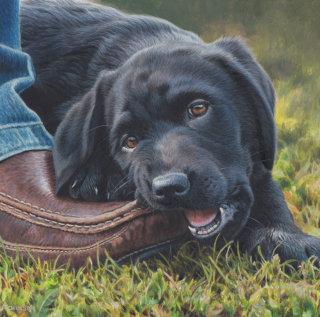 Black Labrador  - Dog illustration