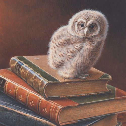 Wildlife illustration of Tawny Owl