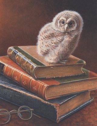 Wildlife illustration of Tawny Owl