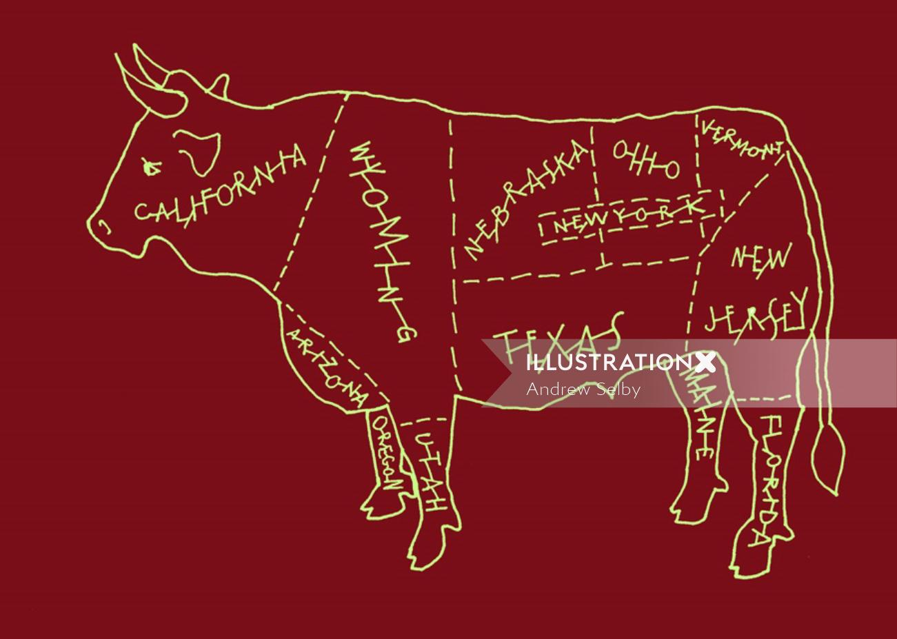 US Bull illustration by Andrew Selby