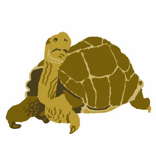 Art of Galapagos Tortoise