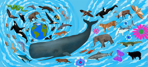 animals, elephant, tiger, bear, whale, killer whale, shark, bat, snake, crocodile, moth, cat, deer
