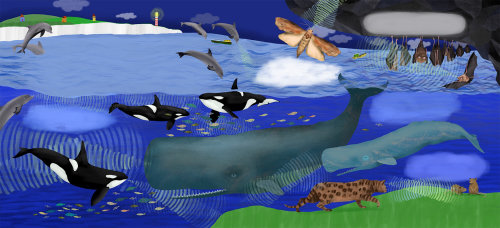 whales, killer whales, dolphins, bats, moth, cat