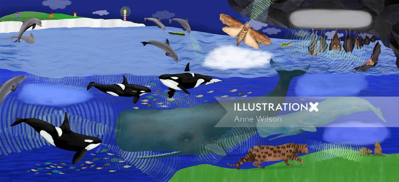 whales, killer whales, dolphins, bats, moth, cat