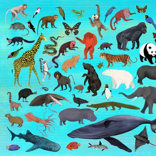 animals, wild animals, spiecies, wildlife
