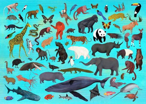 animals, wild animals, spiecies, wildlife
